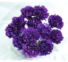40 Fresh-cut Moonshade Purple Carnations