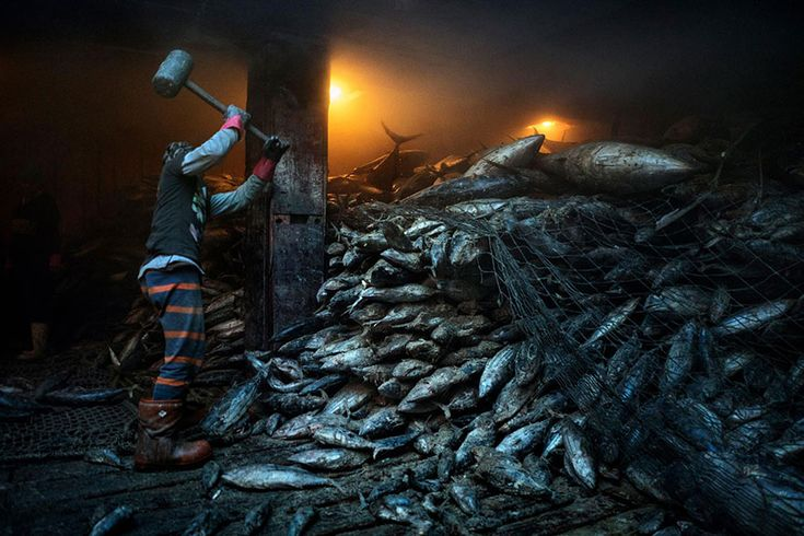 50  Of The Best Images Of The Year Announced By National Geographic