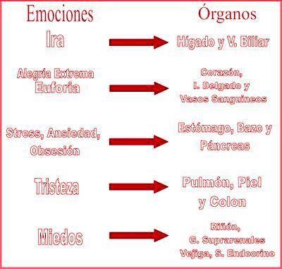 emociones y órganos