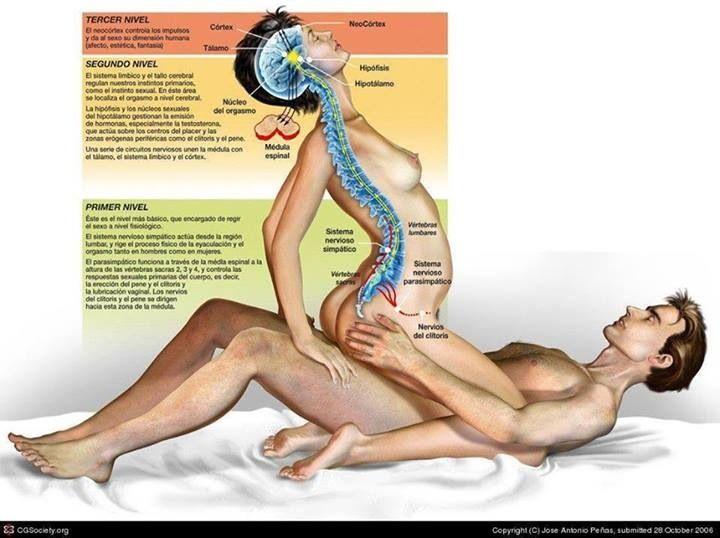 Razones para hacer el amor más seguido 1) Cada vez que haces el amor se alivia la tensión de las venas cerebrales, aliviando los dolores de cabeza. 2) Hacer el amor puede aliviar la congestión nasal. El sexo es un antihistamínico natural. Ayuda a combatir el asma y alergias en primavera. 3) El sexo es uno de los deportes más completos, fortalece casi todos los músculos del cuerpo y ayuda a incrementar la resistencia cardiopulmonar.  Fuente: Sexualidad y Salud