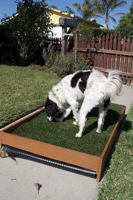 DIY Draining Patio Dog Potty - PetDIYs.com