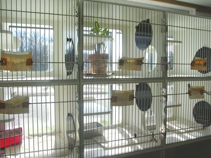 Metal Shelter Cat Kennels : Best cat cages ideas on pinterest indoor