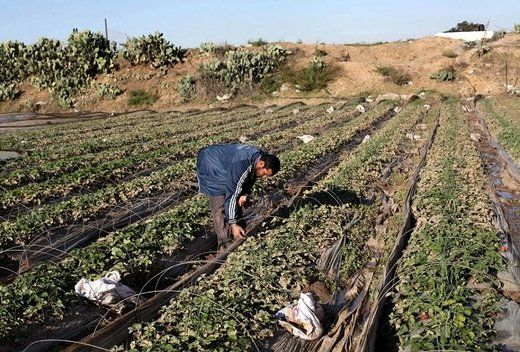 RT Tue, 05 Jan 2016 18:44 UTC  © Unknown More than 400 acres of crops have been destroyed by the IDF near the fence surrounding Gaza, in a lethal no-go zone maintained unilaterally by Israel on th... http://winstonclose.me/2016/01/06/no-one-thinks-of-us-gazans-speak-to-rt-after-israel-destroys-400-acres-of-crops-written-by-rt/