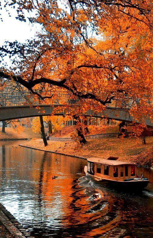 Gorgeous Autumn leaves in Riga, Latvia