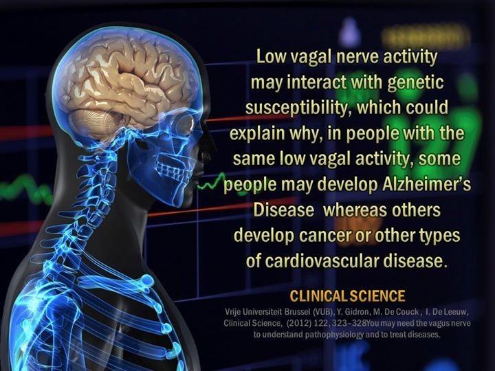 The Brain And The Spinal Cord Make Up The Central Nervous System The Spinal Cord Is Often Thought Of As J Central Nervous System Chiropractic Care Vagal Nerve