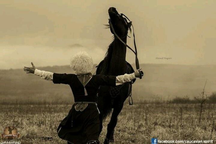 Kabardey horse