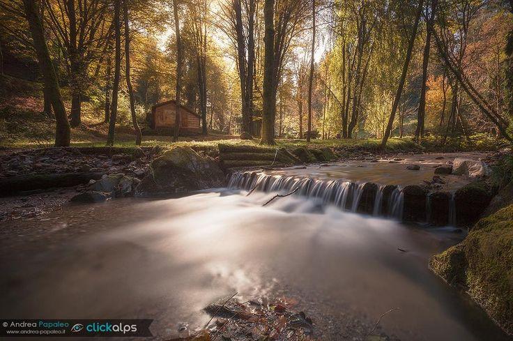   Silenzi    Quel giorno ero da solo. Mi sono gustato il silenzio del bosco lo scorrere del piccolo fiume il rumore delle foglie mosse dal vento... In questa foto c'è tutta quella sensazione che provai quel giorno. Un senso di pace di vibrazioni che fanno muovere i sensi.