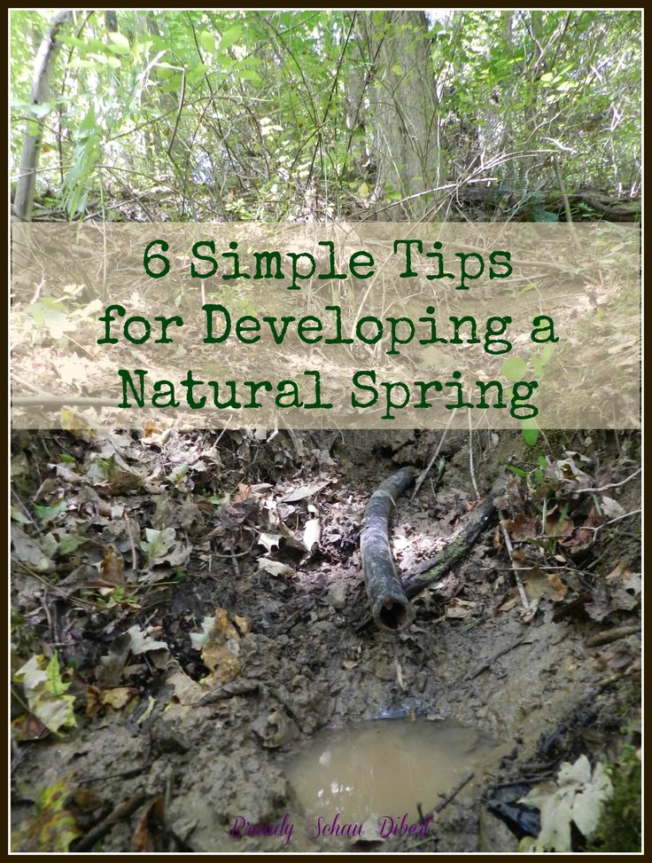 6 Simple Tips for Developing a Natural Spring