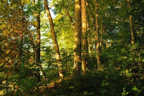 Maple Forest, Ontario, Canada