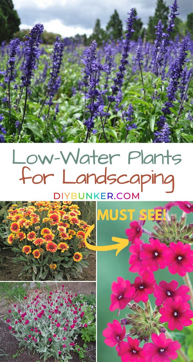 Garden Gardening Plants Landscape Landscaping Garden Create Low Water Garden Create A Low Maintenance In 2020 Low Water Plants Plants Water Garden Plants