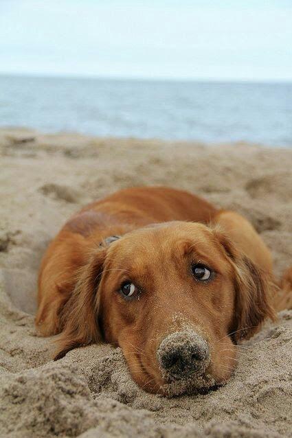 À la plage.