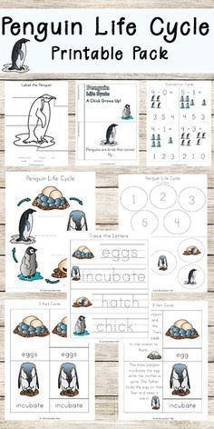 FREE Penguin Life Cycle Worksheets for Kids including printable activities for preschool, kindergarten, first grade, 2nd grade to review not only life cycle and vocabulary and labeling, but counting, addition, emergent reader, and so much more! Makes it fun for kids learning about these fun animals