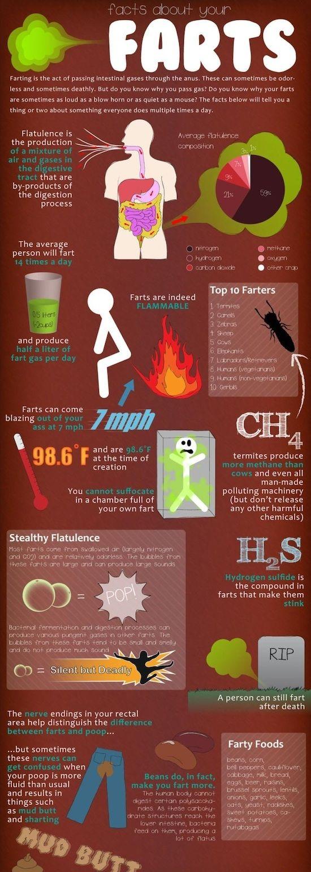 Farts #infographic #flowchart