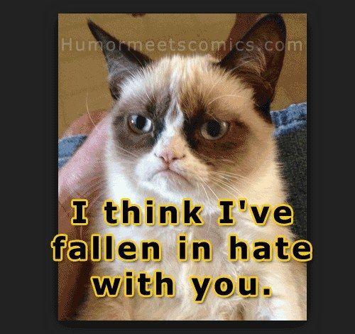 Grumpy Cat Birthday Youtube: Best 20+ Grumpy Cat Valentines Ideas On Pinterest