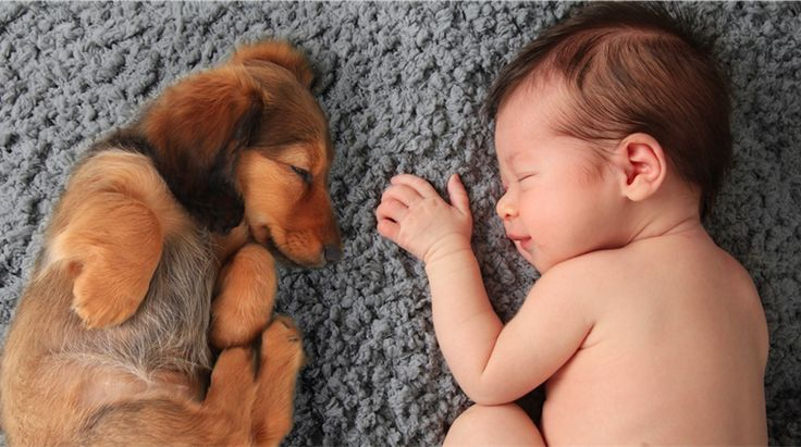Notez cette astuce Votre bébé va bientôt naître et votre famille va s'agrandir. Si vous possédez un animal de compagnie, vous pouvez être certain que quand votre nourrisson arrivera à la maison, votre chien ou chat sera surpris par ce nouveau petit être qui vient compléter votre famille. Il faut bien prendre en compte ce...