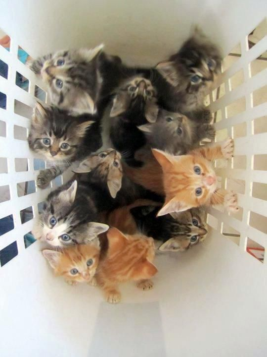 Basket Full of Kittens! (OMG too cute!*)                                                                                                                                                                                 More