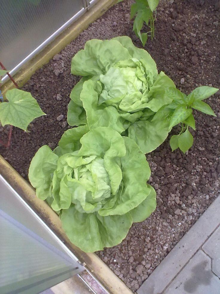 Konzumace první zeleniny u konce