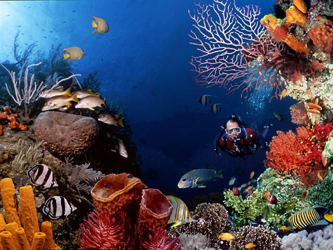 Bunaken island one of the best place to dive in Indonesia