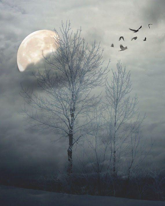 http://www.duskyswondersite.com/wp-content/uploads/2014/08/trees.jpg