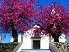 Igreja da graa (pintor joao viola) Tags: landscape igreja graa templrios dornes joaoviola