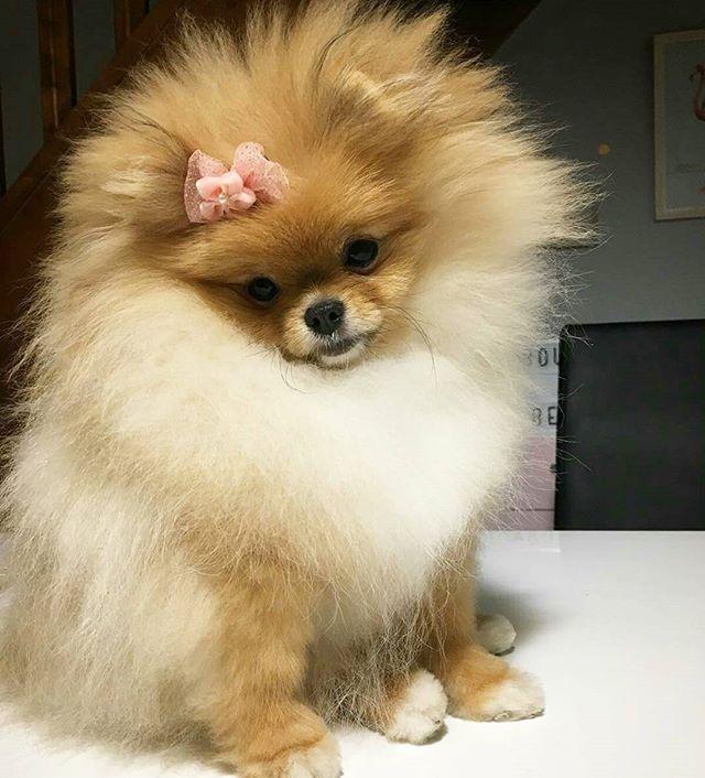 My style spirit animal