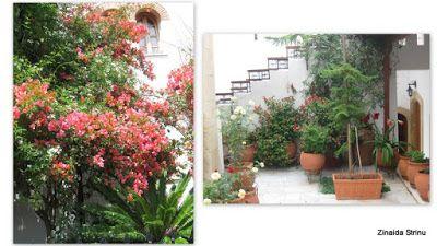Zinnaida : Vegetație în Grecia (3)