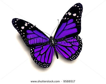 A 3D image of a purple butterfly