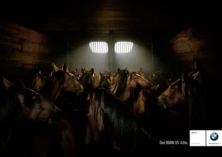 BMW X5: Horses