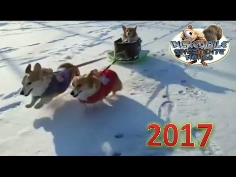 Try don't laugh - Funny animals ( Compilation  April - 04.2017 )