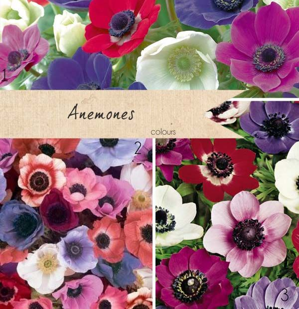casual wedding flowers for september | Anemones Wedding Flowers ~ Get To Know Your Wedding Flowers