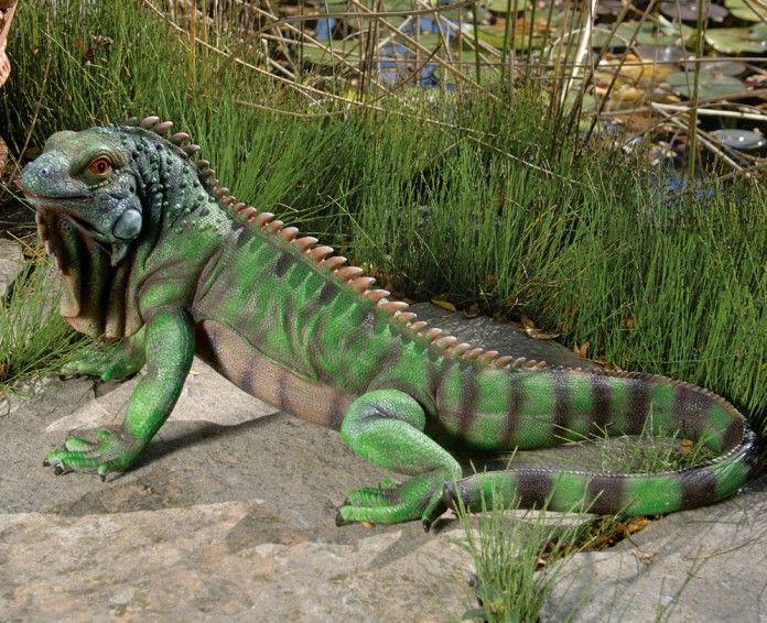 The 25 Best Iguana For Sale Ideas On Pinterest