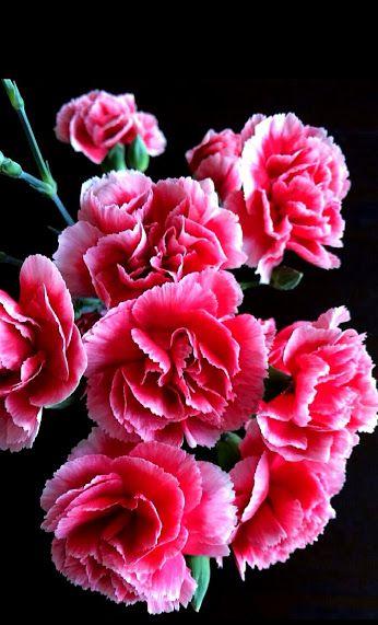 Flowers+ - Topluluk - Google+