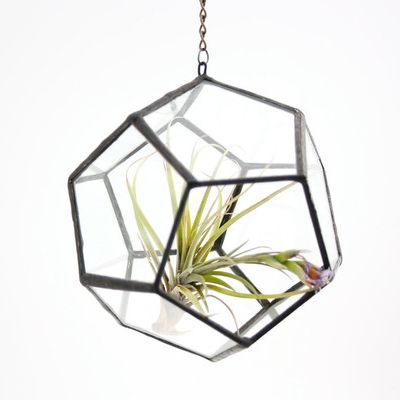 Dodecahedron Hanging Terrarium is perfect for a single air plant!