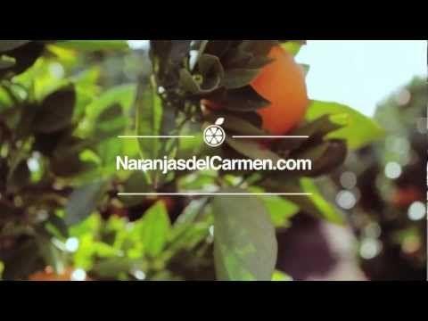 Naranjas del Carmen - Biologische Orangen aus Valencia