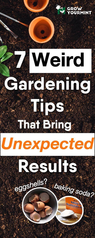 best fabulous gardening tips images on pinterest field of