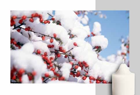 Iced Snowberries™  Sweet berries, apples and fruits are kept crisp by winter's icy air while a dusting of vanilla and musk adds warmth. It's the best of both worlds.