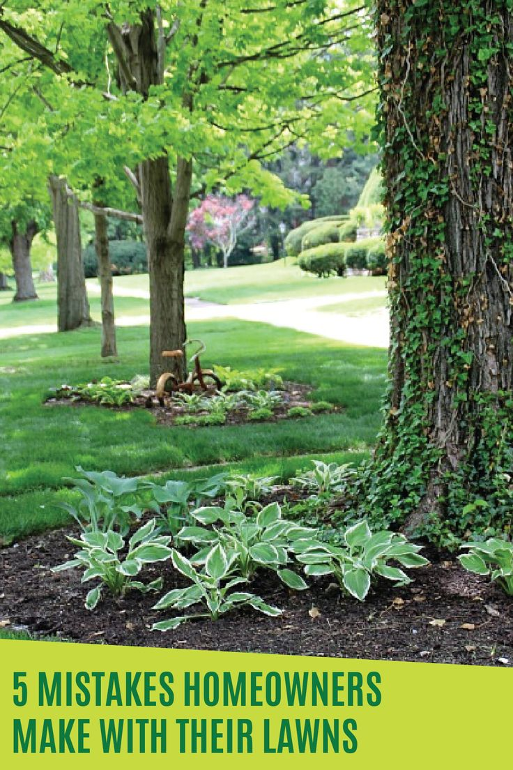 Top 25 ideas about types of grass on pinterest mosquito repelling plants citronella plant and - Grass lawn types make the right choice ...