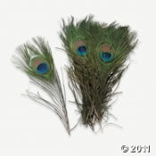 peacock feathers $10