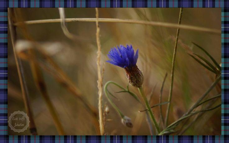 Die 2. Generation macht Blau im November #Fotografie #Natur #Pflanzen #nature #plants #fotography