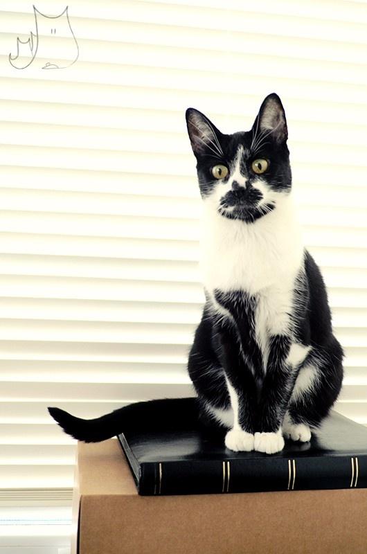 Beci <3 #cat