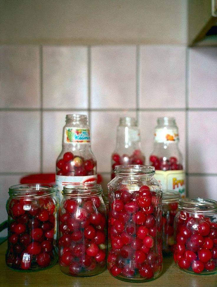Cherries 2002