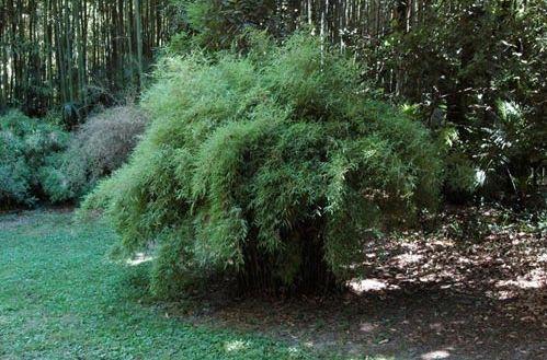 Les 25 meilleures id es de la cat gorie bambou en pot sur for Conseil plantation jardin