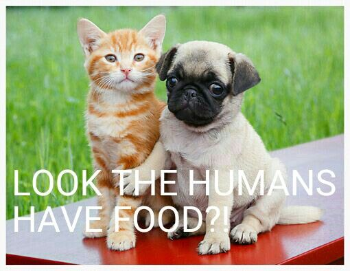 Pugs and cats so cute!