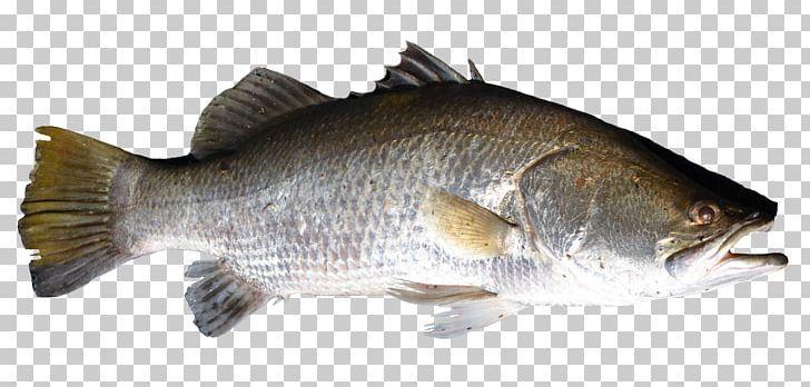 Fish Png Fish Fish Graphic Fish Psd Texture