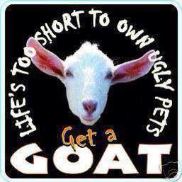 Get a Goat...