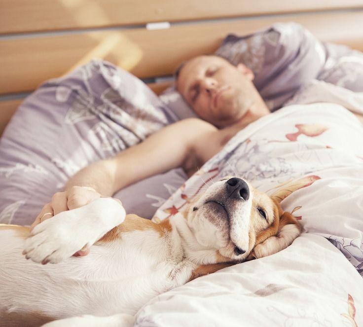 Sover din hund i din säng? Med dig? Grattis. Det mår du bättre av.