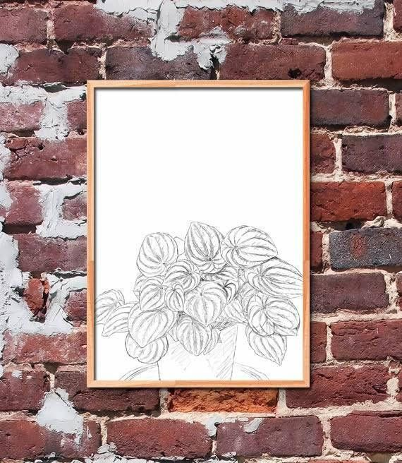 Peperomia Plant Printable Art by gendots
