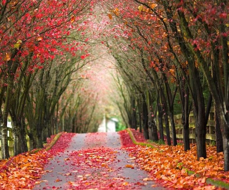 Autumn Tree Tunnel, Wales