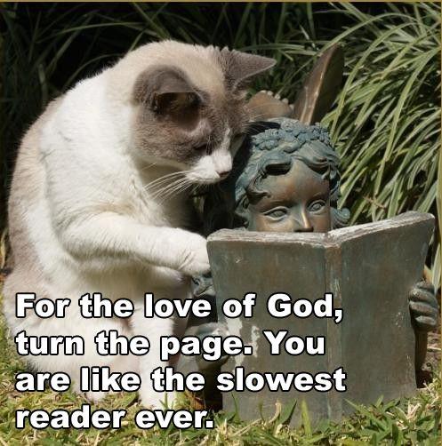 Impatient cat