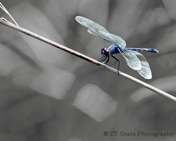Dragonfly Fine Art Print, Blue, Gray, Dragonfly photography, Nature wall art, Office decor via Etsy